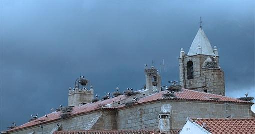 Cegonha colônia na igreja paroquial